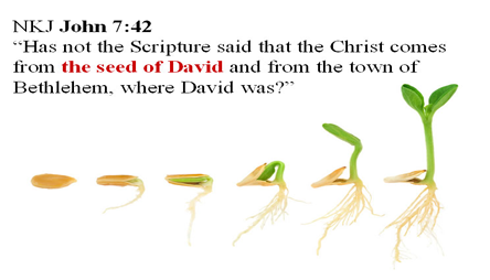 Picture of the development of seed into a plant with the same scripture as the above picture.