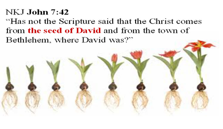 Picture of several points in the development of a bulbed seed plant with the scripture John 7:42 written on it